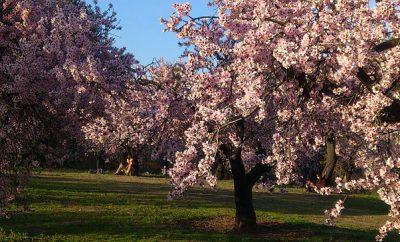 primavera para todos (Parte I)