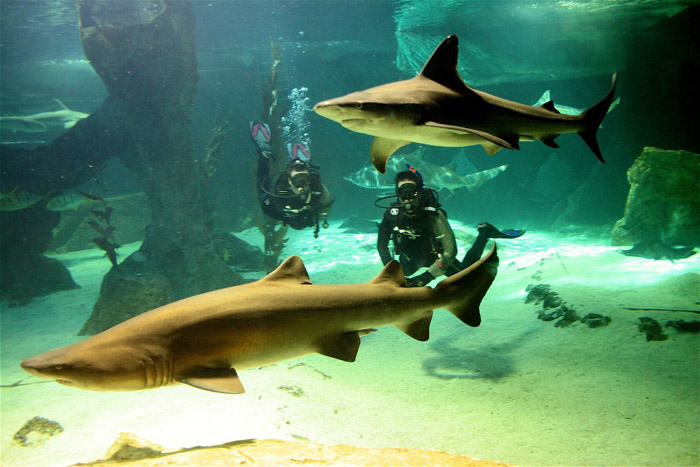 Tiburones-Zoo-Madrid
